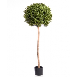 Boxwood Ball Tree