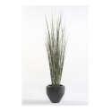 Grass Plant w Bamboo