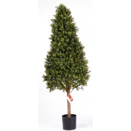 Boxwood Pyramid Tree
