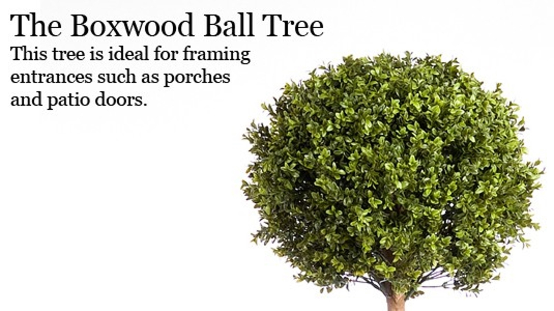 The Boxwood Ball Tree. This tree is ideal for framing entrances such as porches and patio doors.